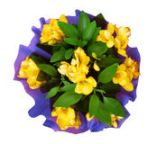Bouquet of yellow fresia flower Royalty Free Stock Photo
