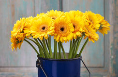 Bouquet of yellow gerbera daisies in blue bucket Stock Photos