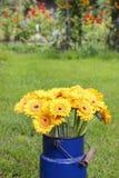 Bouquet of yellow gerbera daisies in blue bucket Stock Images