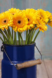 Bouquet of yellow gerbera daisies in blue bucket Stock Image
