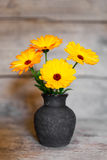 Bouquet of yellow gerbera in a vase on wooden background Stock Image