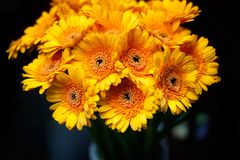 Yellow gerberas background. Bouquet of yellow gerberas flowers in the vase over dark background. Orange gerberas bunch background, shallow DOF, horizontal royalty free stock photo