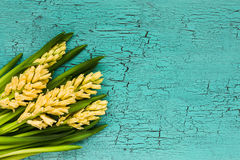 Bouquet of yellow hyacinths on  blue background. Top view Stock Photography