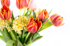 Bouquet of yellow hyacinths and red tulips Stock Photography