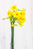 Bouquet of yellow lent lilly (daffodil) on a wooden surface Stock Image