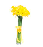 Bouquet of yellow lent lily daffodil or narcissus Stock Photography