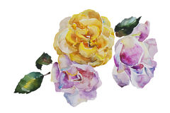 Bouquet of yellow and light pink roses with leaves. Corner watercolor pattern from original art Royalty Free Stock Images