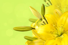 Bouquet of yellow lilies Royalty Free Stock Photos