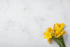 Bouquet of Yellow lilies on concrete white background Royalty Free Stock Images