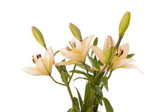 Bouquet of yellow lilies. Royalty Free Stock Photos