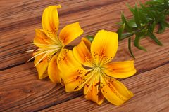 Bouquet of yellow lily flower on a brown wooden. Table Royalty Free Stock Photos