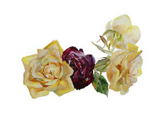 Bouquet of yellow and maroon roses with leaves, corner watercolor Royalty Free Stock Image