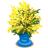 Bouquet of yellow Mimosa in blue vase. Vector illustration in cartoon style on white background. Image isolated for your design needs vector illustration