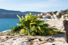 Bouquet of yellow mimosa flowers lies on the beach, on the rocks. Sunny day, the sea, Europe Stock Photo
