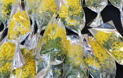 Bouquet of yellow mimosas ready to be given away to women during Stock Photos