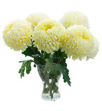 Bouquet of yellow mums Royalty Free Stock Image
