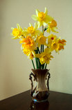 Bouquet yellow narcissus Stock Photos