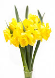 Bouquet of yellow Narcissus Stock Image