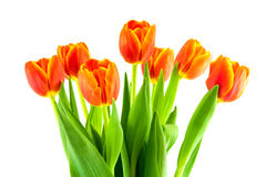 Bouquet of yellow and orange tulips isolated Stock Images