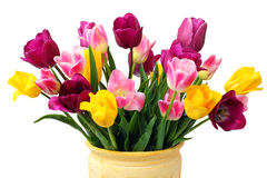 Bouquet of Yellow, Pink and Purple Tulips. In a clay pot isolated on a white background Royalty Free Stock Photos