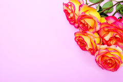 Bouquet of yellow-pink roses on a pink background Stock Photo