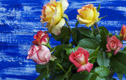 Bouquet of yellow and pink roses Royalty Free Stock Photos