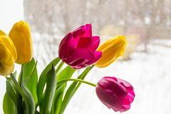 A bouquet of yellow and pink tulips in a vase on the windowsill. A gift from flowers by the window. A bouquet of yellow and pink tulips in a vase on the royalty free stock images