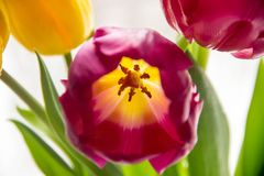 A bouquet of yellow and pink tulips in a vase on the windowsill. A gift from flowers by the window. A bouquet of yellow and pink tulips in a vase on the royalty free stock photography