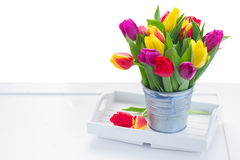 Bouquet of  yellow, purple and red  tulips Stock Images