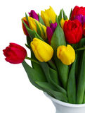 Bouquet of  yellow, purple and red  tulips Stock Photography