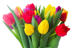 Bouquet of  yellow, purple and red  tulips Stock Image