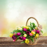 Bouquet of  yellow and purple  tulip flowers Royalty Free Stock Images