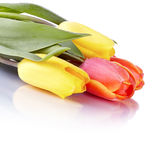 Bouquet from yellow and red tulips. Royalty Free Stock Images