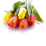 Bouquet from yellow and red tulips. Royalty Free Stock Photography