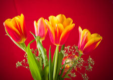 Bouquet of yellow-red tulips Royalty Free Stock Photo
