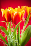 Bouquet of yellow-red tulips Royalty Free Stock Photos