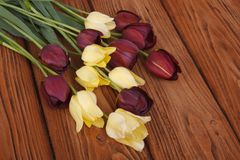 Bouquet of yellow and red tulips on a wooden Royalty Free Stock Photo