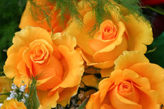 Bouquet of yellow roses. A beautiful bouquet of yellow roses Royalty Free Stock Images