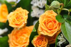 Bouquet of yellow roses. Royalty Free Stock Image