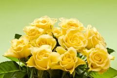 Bouquet of yellow roses. On green background stock images