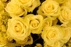 Bouquet of yellow roses. A beautiful flower bouquet of yellow roses stock image