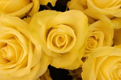 Bouquet of yellow roses. A beautiful flower bouquet of yellow roses stock images
