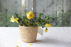 A bouquet of yellow roses. In decorative pot Stock Photography