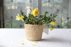 A bouquet of yellow roses. In decorative pot Royalty Free Stock Photo