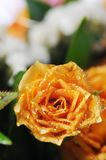Bouquet of yellow roses. Royalty Free Stock Photo