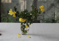 A bouquet of yellow roses. In a transparent glass Royalty Free Stock Photo