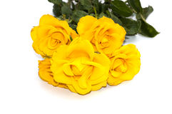 Bouquet of yellow roses on a white background Royalty Free Stock Images
