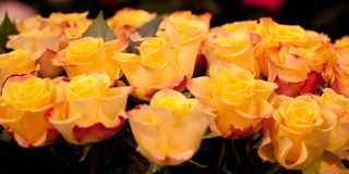 Bouquet of yellow roses for a wonderful gift. Bouquet of bright and beautiful yellow-orange roses for a wonderful gift Stock Image