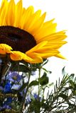Bouquet with yellow sunflower Stock Photos