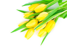 Bouquet of yellow tulip flowers royalty free stock photos